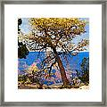 Grand Canyon National Park And Tree Framed Print