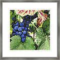 Grapes 3 Framed Print