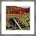 Grapevines In Vineyard, Traverse City Framed Print