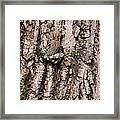 Gray Tree Frog Framed Print