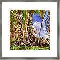 Great Blue Heron Lift Off Framed Print