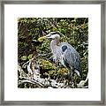 Great Blue Heron On Log Framed Print