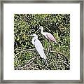 Great Egret And Roseate Spoonbill Framed Print