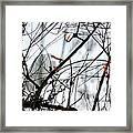Great Egret Roosting In Winter Framed Print