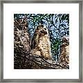 Great Horned Owl Family Framed Print