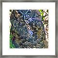 Great Horned Owl In Salmonier Nature Park-nl Framed Print