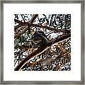 Great Horned Owl Looking Down  Framed Print
