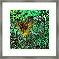 Great Spangled Fritillary Ins 49 Framed Print