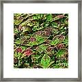 Green And Purple In Nature Framed Print
