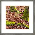 Green And Red Nature In The Forest Framed Print