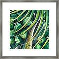Green Coconuts  2  Framed Print