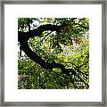 Green Days Framed Print