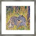 Green Eyed Leopard Framed Print