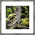 Green Forest Framed Print by Aaron Aldrich