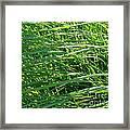 Green Grass Growing Framed Print
