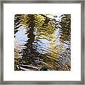 Green Head Mallard Duck Framed Print