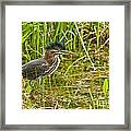 Green Heron Pictures 545 Framed Print