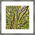 Green Leafy Trees Framed Print