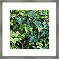 Green With Ivy Framed Print