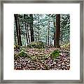 Green Woodland Beauty Framed Print