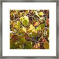 Green Yellow And Dry Leaves Framed Print