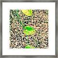 Greenbriar Framed Print