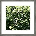 Greenleaves Framed Print
