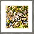 Grey Squirrel - Impressions Framed Print