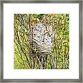Grey Wasps Nest In Willow Bush Framed Print
