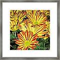 Grouping Of Gerbera Framed Print