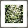 Grove Framed Print