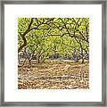 Guava Garden In Autumn Framed Print