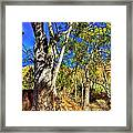 Gum Tree Ridge Framed Print