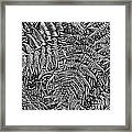 H Ferns Cont Z Framed Print