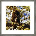 Hanging By The River  Framed Print
