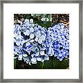 Happy Hydrangea Framed Print