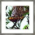Hard Working Bird Framed Print