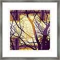 Harmonious Colors - Violet Yellow Orange Framed Print