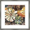 Harvest Gourds Framed Print
