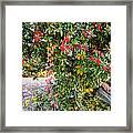 Hawthorn Berry Framed Print