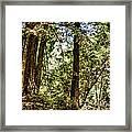 hd 380 hdr - Nisene Marks Framed Print