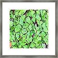 Heart Clovers Framed Print