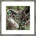 Heart-shaped Tree Framed Print