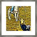 Heeled Steer Framed Print