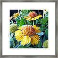 Helenium Flowers 1 Framed Print