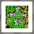 Henbit At Chickasaw Village Site At Mile 262 Of Natchez Trace Parkway-mississippi Framed Print
