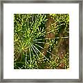 Herbal Abstract Framed Print