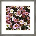 Here's Flowers For You Framed Print