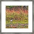 Heron On Shore Of Rapti River In Chitwan Np-nepal  Framed Print