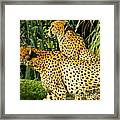 Hey Bro - Do You See What I See? Framed Print